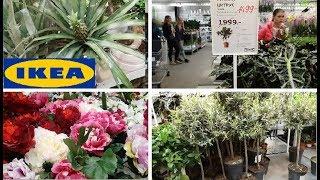 🍍АНАНАСЫ 🍋ЛИМОНЫ и ОЛИВКИ в ИКЕА 🍍ПОЛНЫЙ обзор растений в ИКЕА апрель 2018