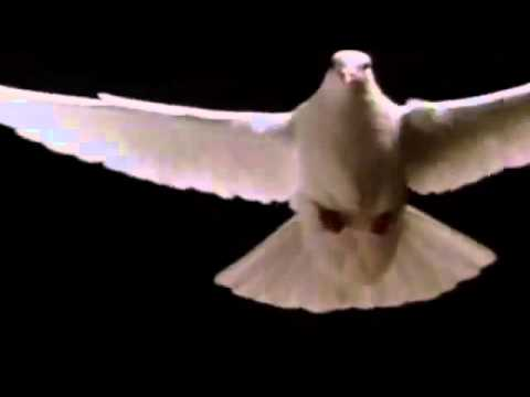 Comentario Paloma Blanca Volando Youtube
