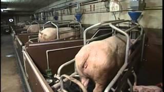 島根ポーク会社案内 美味しさを証明ケンボロー芙蓉ポークのSPC農場の...