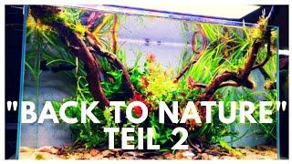 Aquascapen mit Hardscape aus der Natur Teil 2 (bepflanzen)