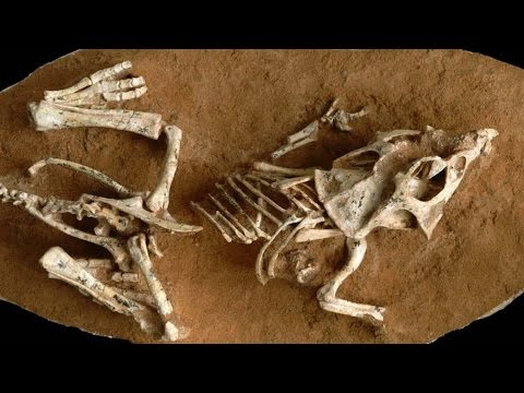 ¿Cuánto tiempo incubaban los dinosaurios sus huevos?