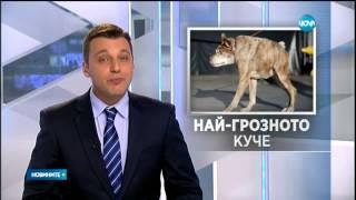 Гърбавият Квази Модо е най-грозното куче в света