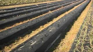 2011 Small Farmer of the Year Thomas Pierce