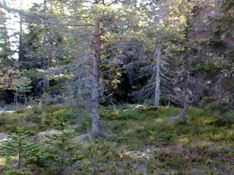 Drev-izze driver hare