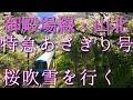 特急あさぎり号 山北の桜吹雪