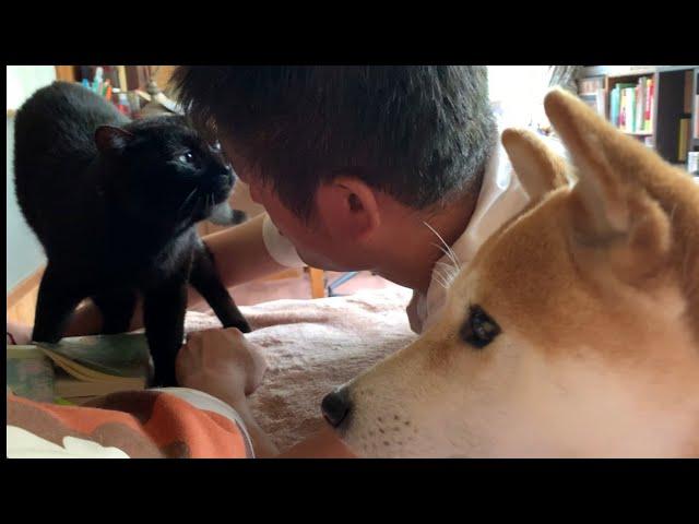 飼い主への愛が激しすぎる猫 Cat nuzzles his owner