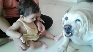 Baby playing with labrador