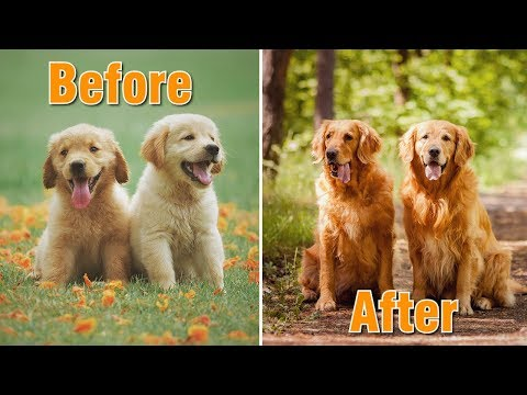 Dog Funny Cute Videos - Dog Breeds Before and After Growing Up - Part 1