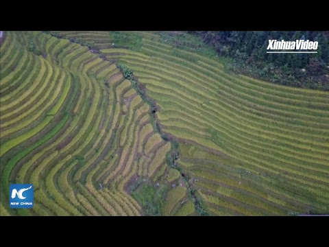 LIVE: Stunning scenery! Eco-tourism helps alleviate poverty near Longji Terraced Fields in SW China