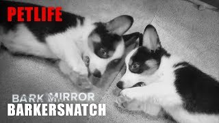 Bark Mirror: Barkersnatch | Black Mirror Puppy Parody