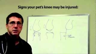 Canine Acl/ccl Surgery And Rehabilitation