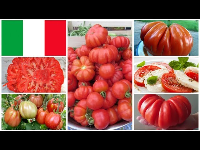 Привет из солнечной Италии: лучшие сорта итальянских томатов!