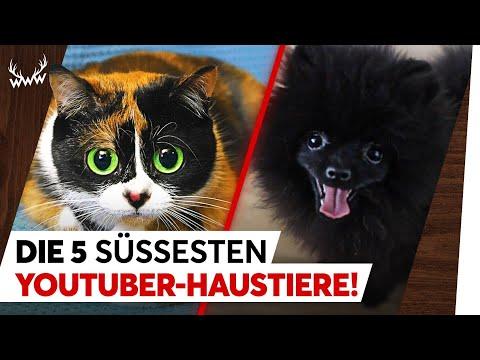 Die 5 SÜSSESTEN YouTuber-Haustiere! | TOP 5