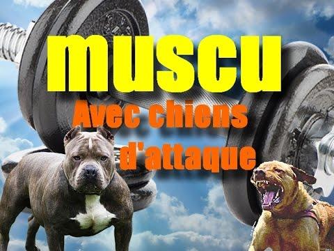 FREKO : cours de muscu avec chiens d attaque