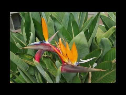 New Zealand Plants
