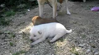 マリと子犬