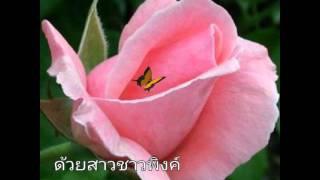 กุหลาบเวียงพิงค์-อรวี สัจจานนท์