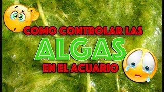 Como controlar las algas en el acuario