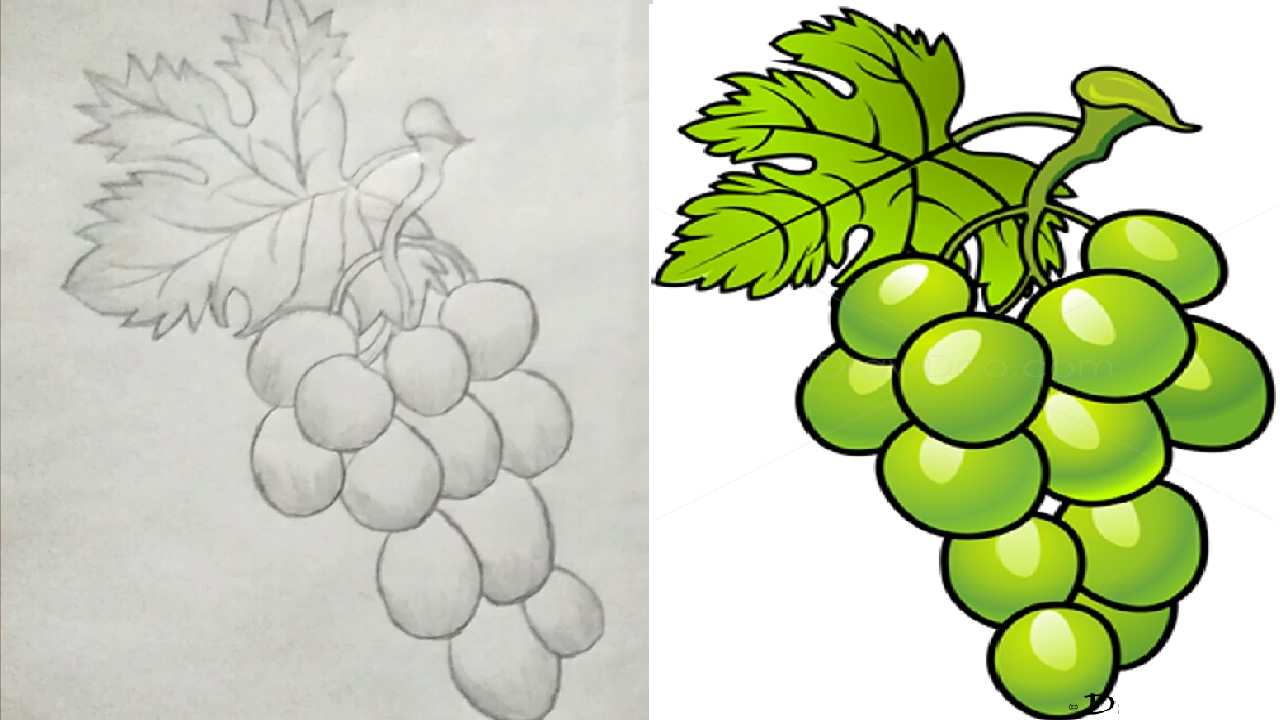 How To Draw A Grapes Step By Step For Beginners & Drawing Lessons For Kids