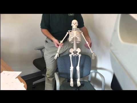 Introduction to basic anatomical terms
