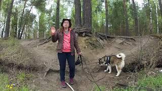 Как ездить с собакой в общественном транспорте походы с собакой
