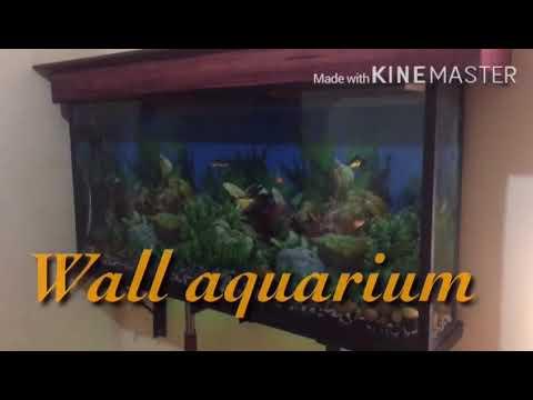 Wall Mount Aquarium