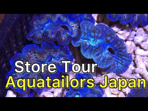 Aquarium Store Tour - Aqua Tailors Osaka Japan