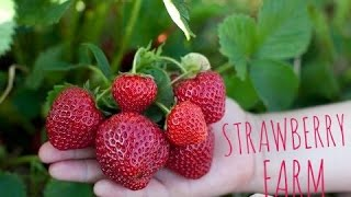 strawberry shortcake songs