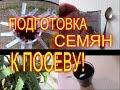 СЕМЕНА ТОМАТОВ//ПОДГОТОВКА СЕМЯН К ПОСАДКЕ//МОЯ ЛЮБИМАЯ УСАДЬБА