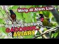Penampakan Burung Burung Gacor Di Aviary Semi Alam Memang Beda Gacor Di Alam Dengan Di Sangkar  Mp3 - Mp4 Download