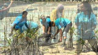 Vale Volunteer Malaysia( V-Day 2012 )Mangrove Replanting Program - Unofficial Version