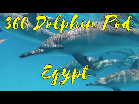 Swimming with Dolphins in 360! (360 video)