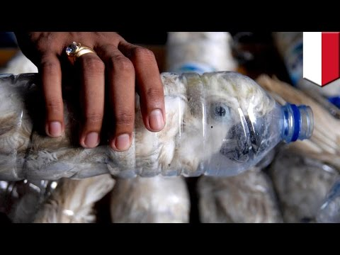 Индонезиец держал птиц в пластиковых бутылках