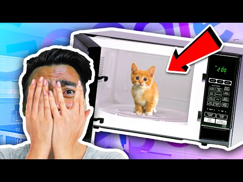 download Can You Microwave A Cat?!   Google Feud
