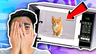 Can You Microwave A Cat?! | Google Feud
