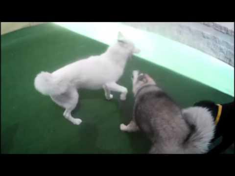 The Barking Dog 4 22 17