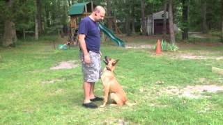 Sit Means Sit Dog Training Of Ocean County Nj
