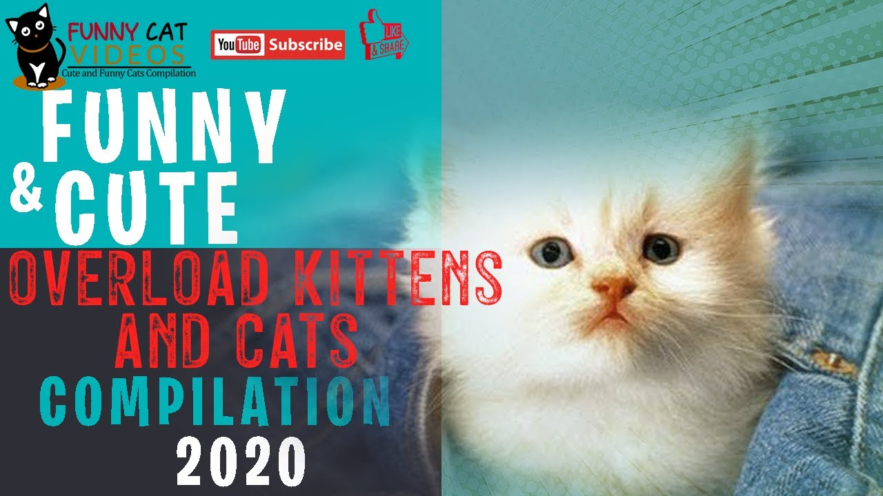 Funny and Cute Overload Kittens & Cats Compilation 2020   Animal Funny Videos Compilation