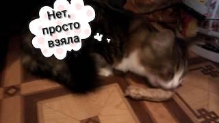 Куриная шейка для кошки