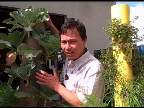 Grow A Patio Vegetable Garden With 14 Crops In 2 Square Feet   The Garden  Stick