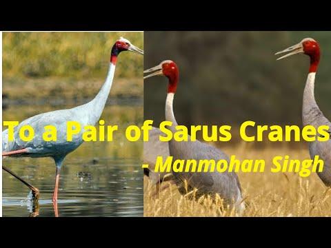 To a Pair of Sarus Cranes poem Explanation   Karnataka SSLC English classes   Jijo Viji Thomas