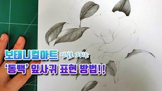 보태니컬아트 연필 그림 강좌 | 동백꽃 필 무렵에 동백 잎사귀 그리기 Draw the Botanical Ar…