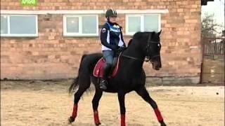 Девушка из Хакасии покоряет вершины конного спорта
