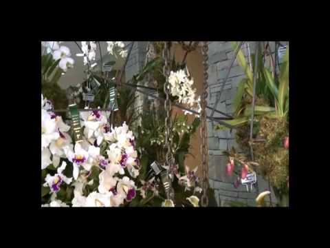 ORCHID SHOW IN TORONTO Part 1 / TRIỂN LÃM HOA LAN TẠI TORONTO 2010