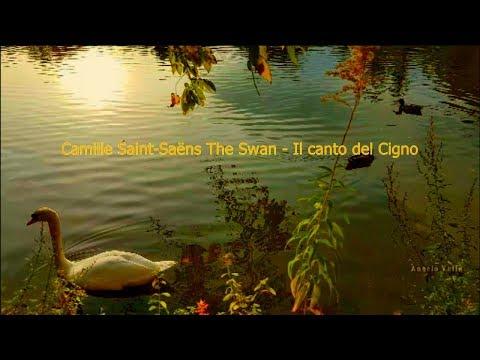 Saint Saens The Swan Il canto del cigno