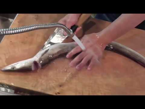 How To Clean and Fillet Pike Eel | Filleting Fish