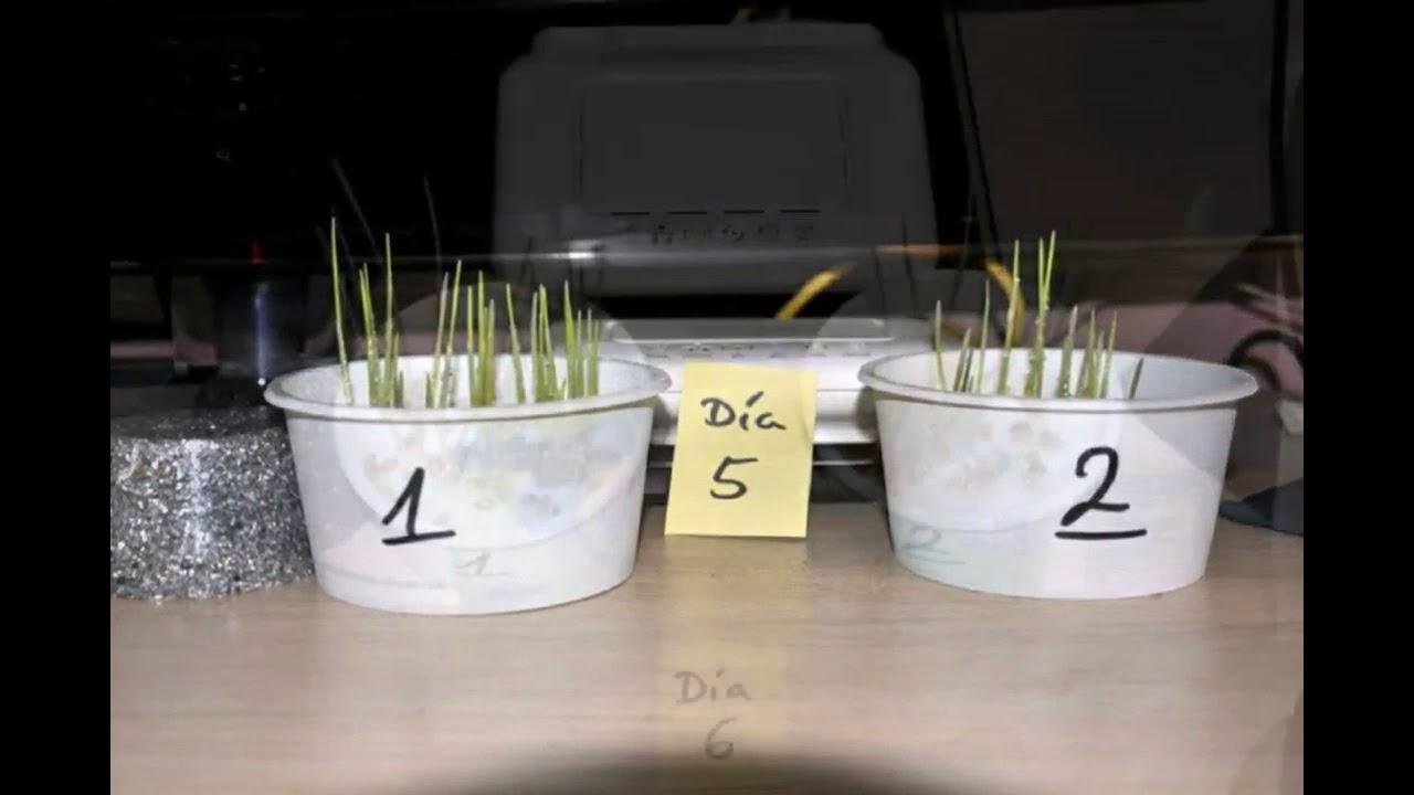El efecto de las Orgonitas sobre unas semillas - Orgonangel