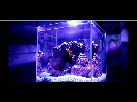 Запуск и оформление аквариума 15 литров своими руками (HD)