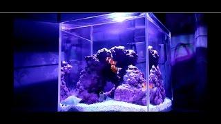 Запуск и оформление аквариума 15 литров своими руками (HD)(Домик для Немо или вечер «без гаджетов». Запуск в домашних условиях морского нано аквариума объемом 15 литро..., 2016-12-11T07:27:14.000Z)