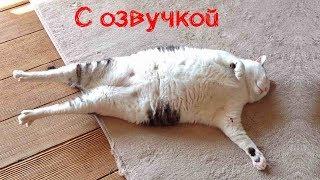 СМЕШНЫЕ КОТЫ С ОЗВУЧКОЙ – Лютые приколы с котами и кошками (Смешные кошки, видео мемы) 2019